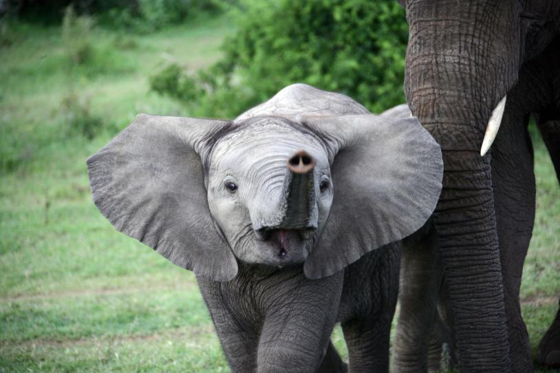 Amakhala - Elephantfamily