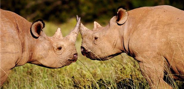 Amakhala - Rhinolove
