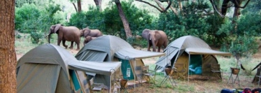 kamperen wilde dieren