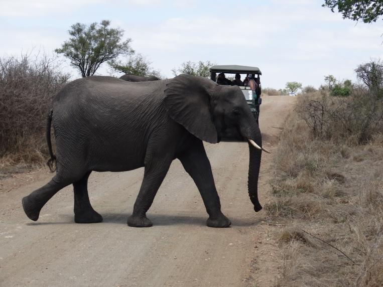 olifanten (1)