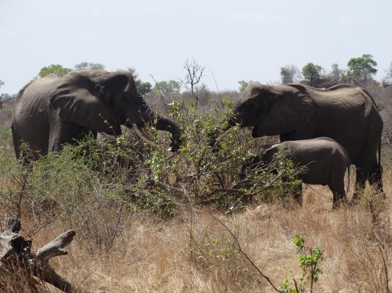 olifanten (13)