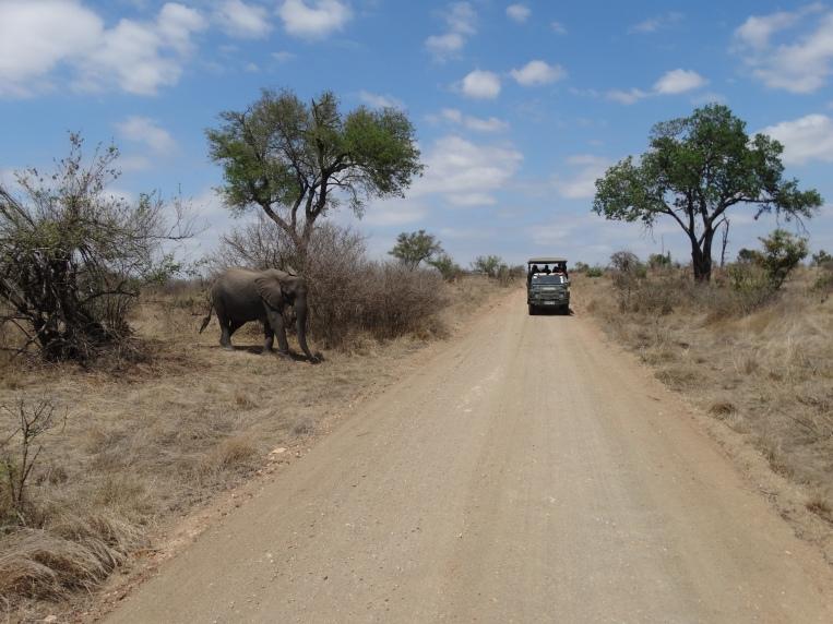 olifanten (21)