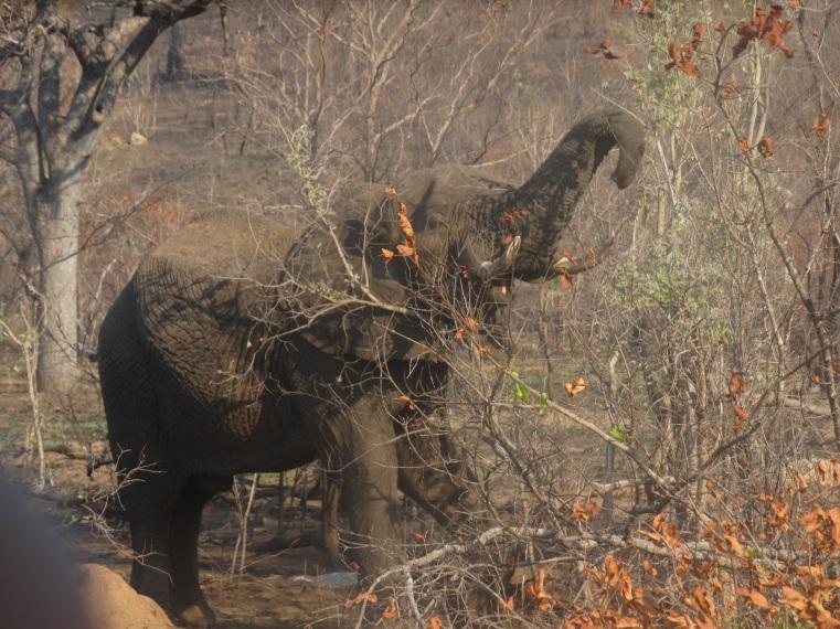 olifanten (22)
