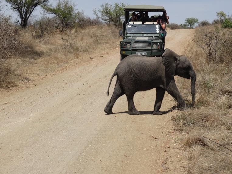 olifanten (24)